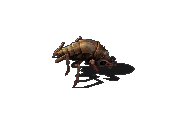 Small biter.png