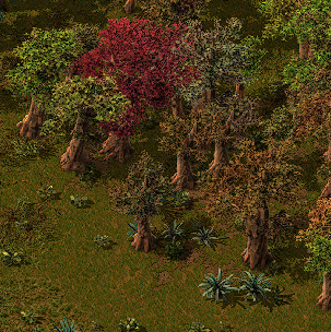 Trees in world.png